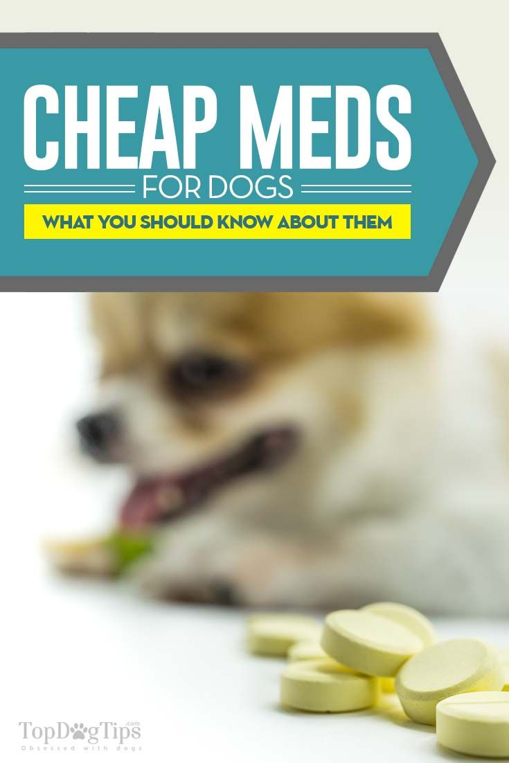 Cheap Pet Meds Online: Most Legit Sites and How to Buy Safely