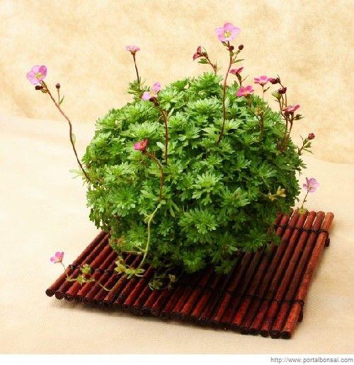 Bonita técnica japonesa para crear paisajes en miniatura