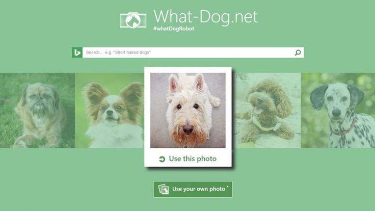 INSÓLITO: podés saber qué raza de perro sos según tu cara y personalidad