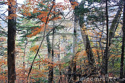 Wonderful forest autumn in europe
