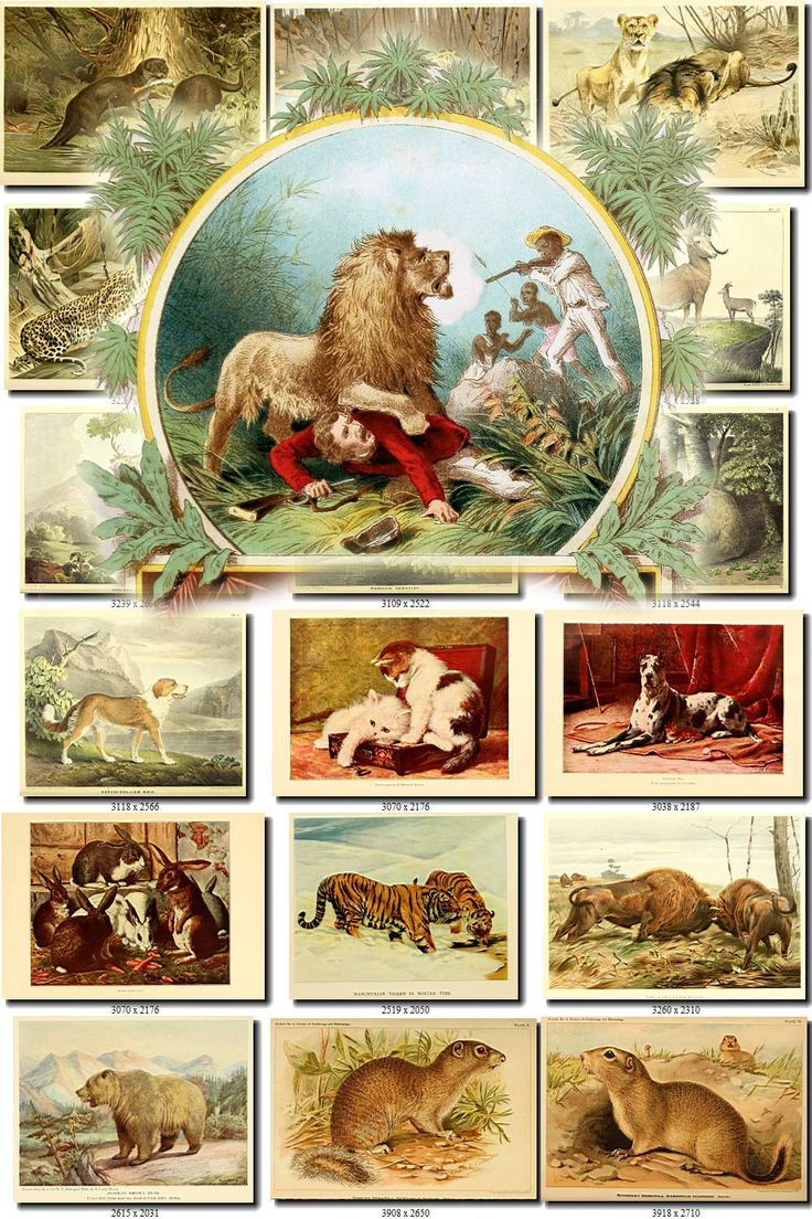 MAMMALS-53 Collection of 221 vintage images animals pictures with background illustration animals High resolution digital download printable by ArtVintages on Etsy