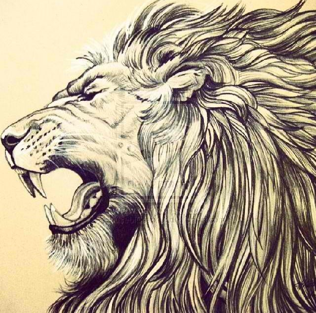 Gallery For gt Lions Face Roaring Drawing
