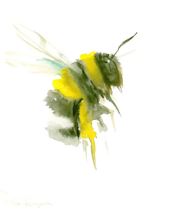1000 Images About Watercolor Insects On Pinterest