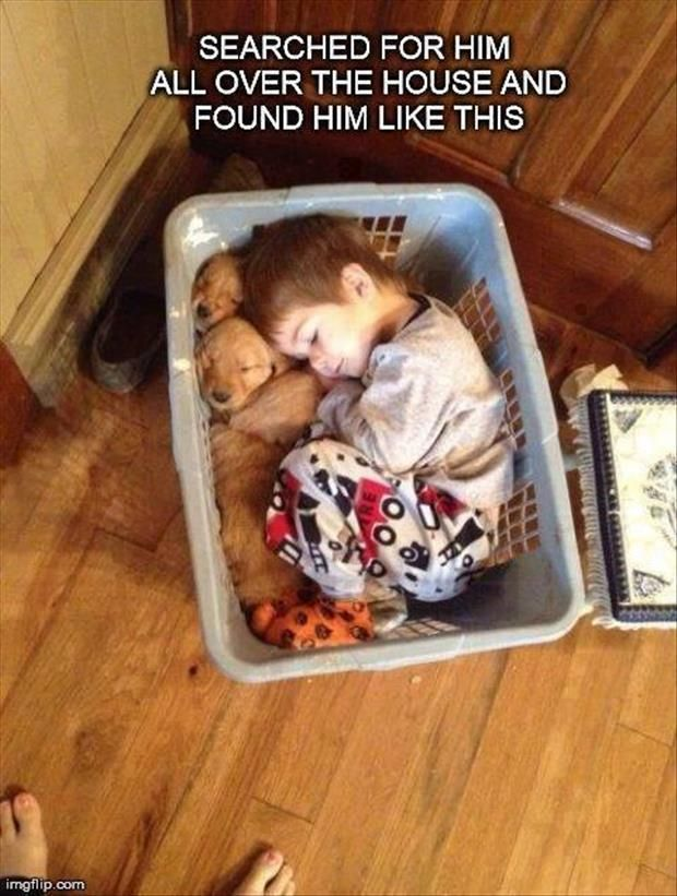 Seriously, everyone should be required to nap with a basket full of puppies everyday.