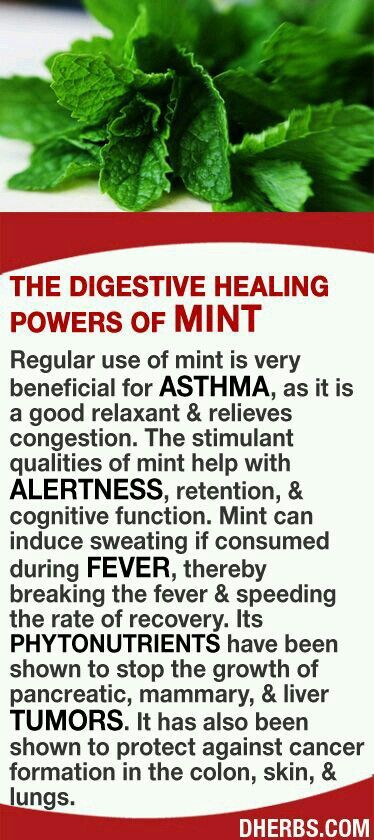 Mint for asthma treatment