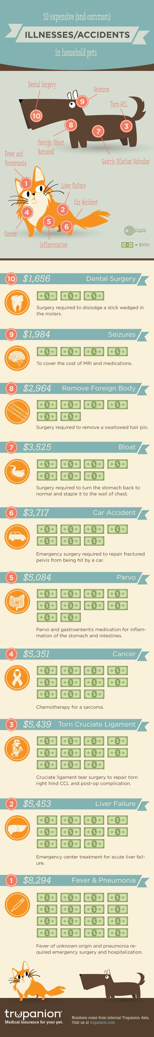 10 Expensive (and common) Illnesses/Accidents in Household Pets