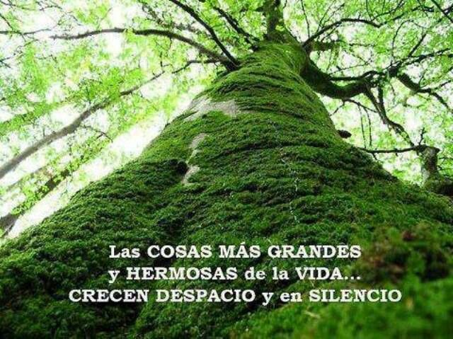 Las cosas grandes de la vida crecen despacio y en silencio. #frases