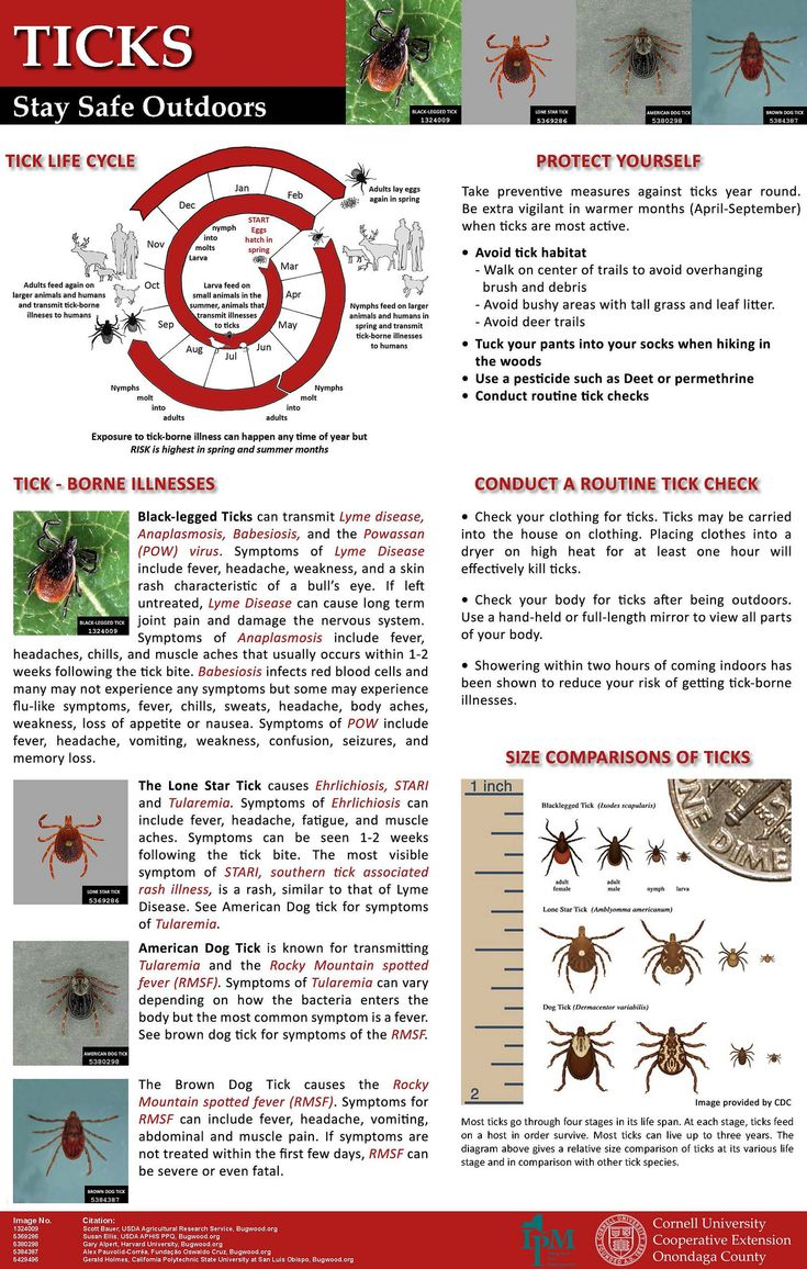 ticks new york state integrated pest management - 735×1156
