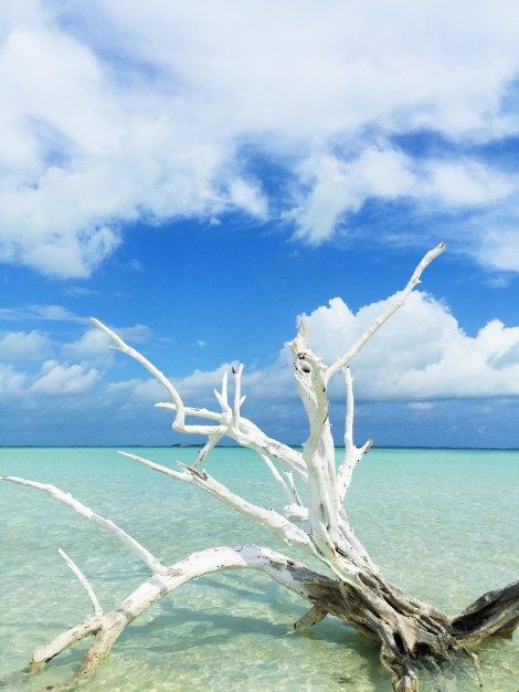Harbour Island Bahamas Things to Do