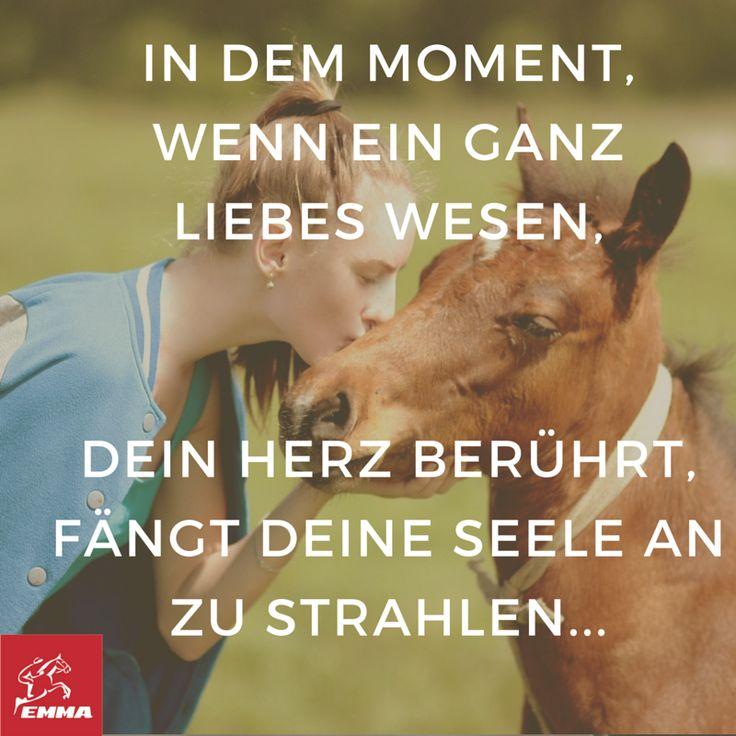 Pferdesprüche & Pferdezubehör-emma-pferdefuttershop.de(10)