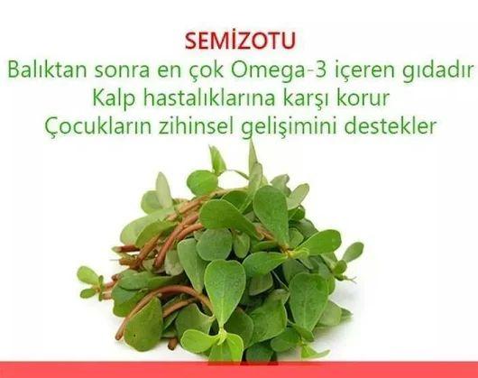 Omega-3 deposu Semiz otu