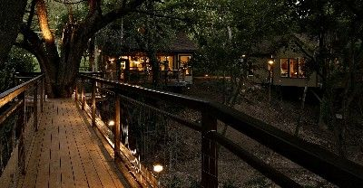 tree house rentals in texas | night time at river road treehouse tree house bridge across