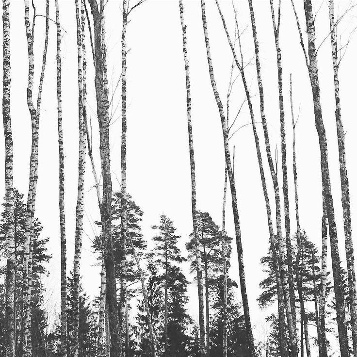 #indreøstfold #dypeskoger