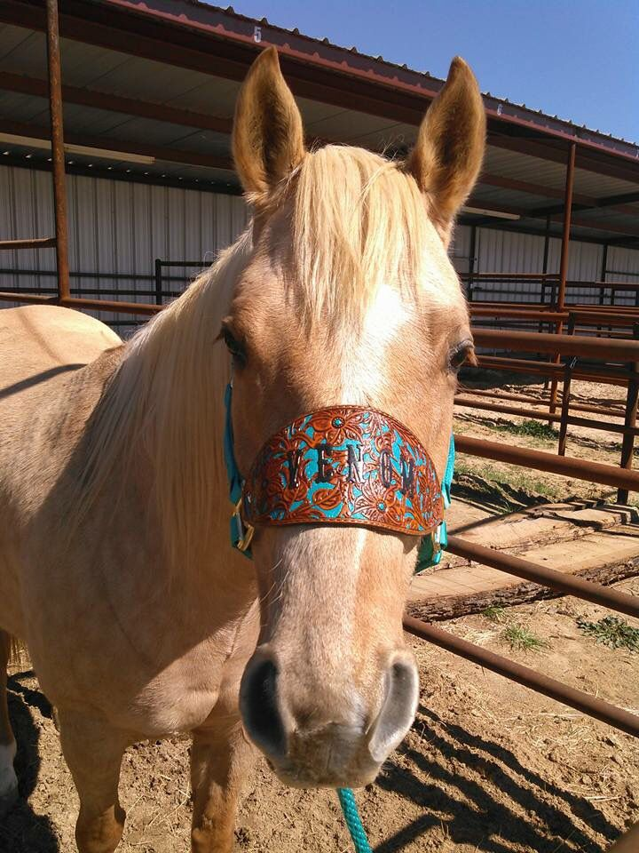 Bronc halter template 3 dad t bronc halter horse maxwellsz