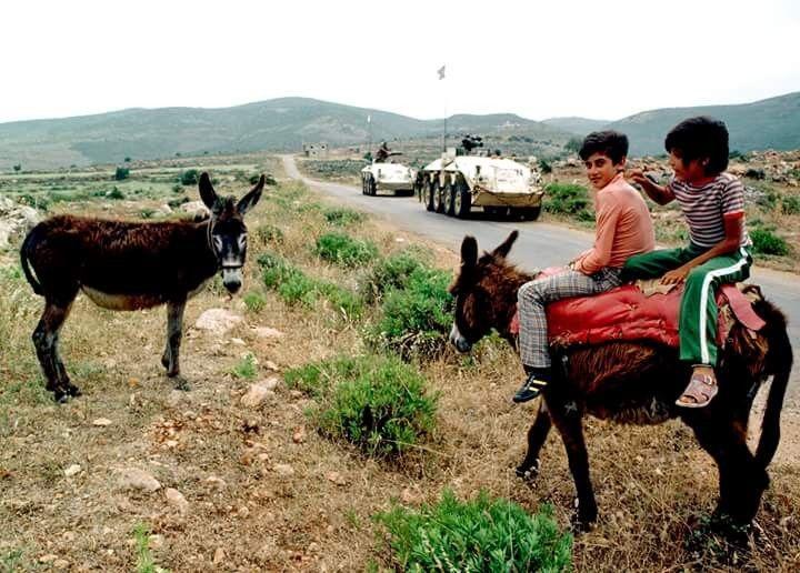 بلدة صديقين ١٩٨٠ جنوب لبنان حمير و دبابات Cow Animals