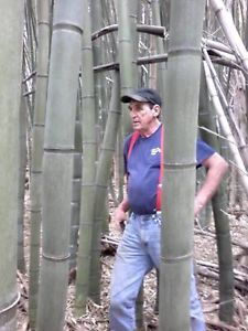 1-JAPANESE-TIMBER-GIANT-BAMBOO-12-L