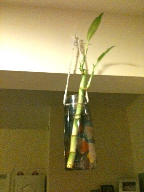 Hanging bamboo vase made from a used shampoo bottle, kitchen twine, and acrylic paints. Looking forward to the roots populating the vase a bit...