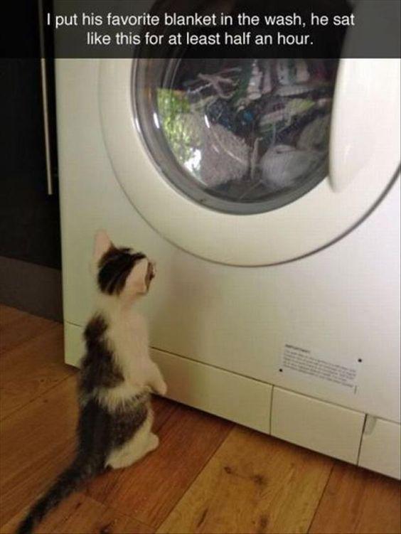 f36eb22ff80dfa920f34879e850d6d61 so funny funny stuff 1249 best cats in windows & doorways images on pinterest animals,Cat Blanket Meme