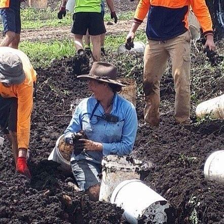 🍠 sometimes you've got to get down and dirty on the farm #sweetpotato #farming #aussiefarming #bundaberg #carterandspencer #flashback