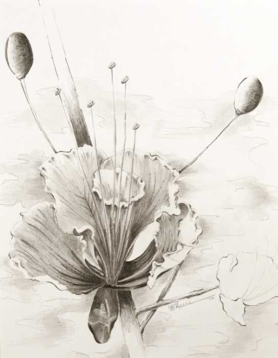 pencil drawing of flowers