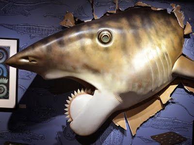 Shark Bytes: Shark News - February 3, 2016