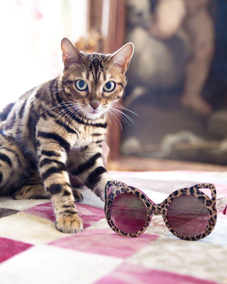 These new, round, cat-eye sunglass frames will be your summer essentials!   #DGWomen #DGEyewear