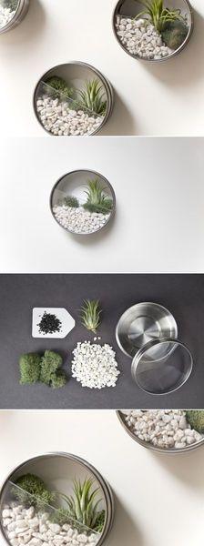 64.空き缶を植物栽培のテラリウム