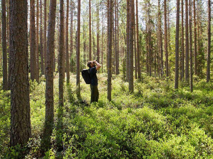 Ohjeet metsään eksymisen varalle