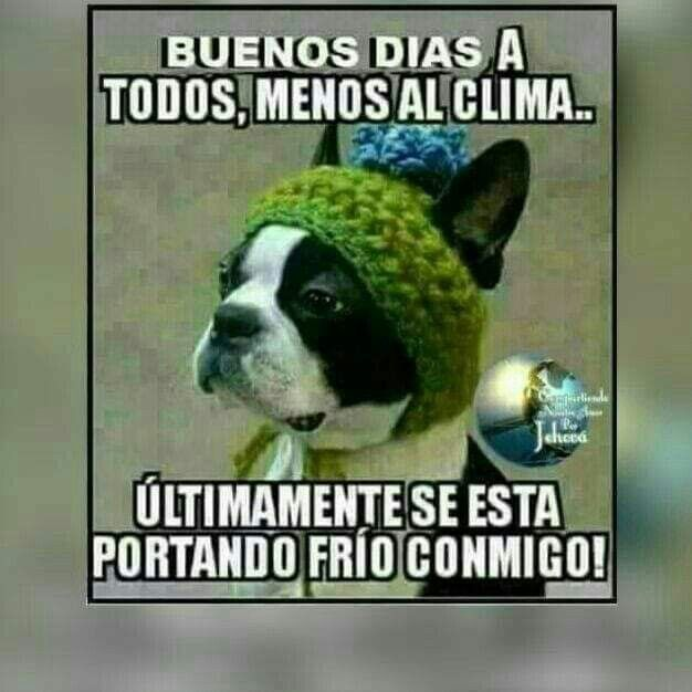Pin By Dora Alicia On Buenos Dias Cute Messages Humor Funny Memes