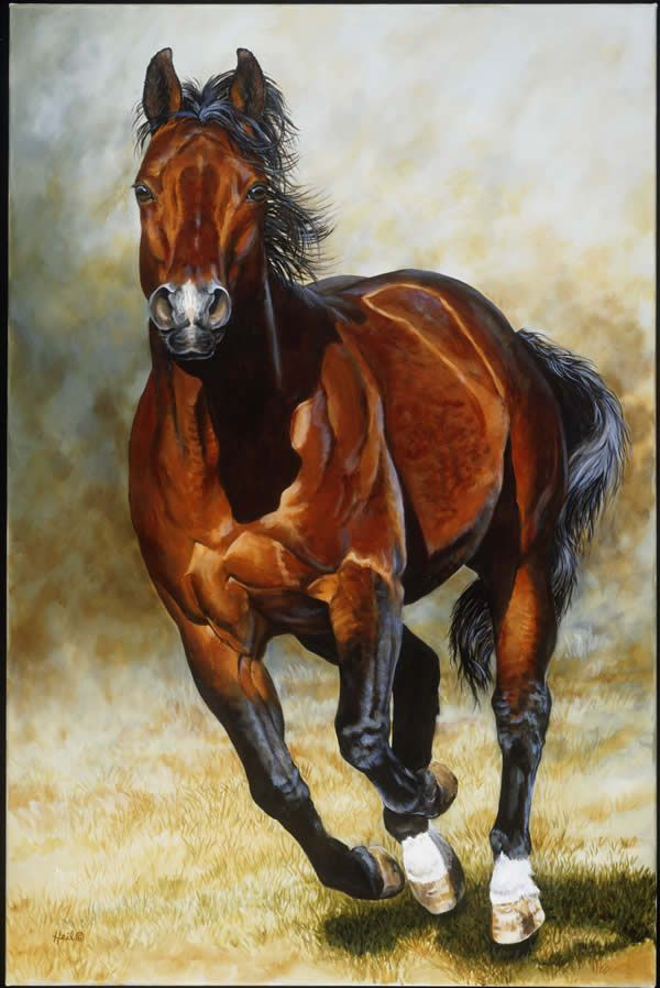 "Moni Heil Gallery, fine art. Dapple bay Quarter Horse painting, ""Covering…"