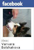 Как отучить щенка кусаться | Дрессировка собак