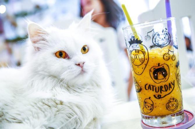 """""""Cat Cafè"""" e """"Dog Restaurant"""": come cambia la cultura sugli #animali  http://www.lasicilia.it/news/qualazampa/46639/cat-cafe-e-dog-restaurant-come-cambia-la-cultura-sugli-animali.html"""