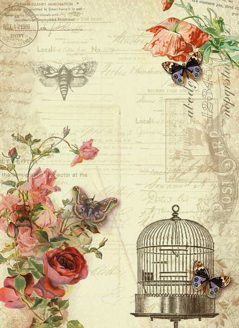 butterfly and birdcage paper with rose corner accents