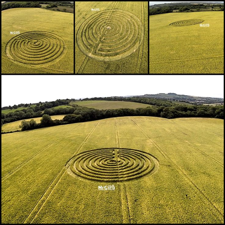 Crop Circle at Blackhorse Lane, nr Margery, Surrey. Reported 16th June 2015.