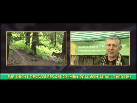 Die NACHT DES WOLFES im Wildpark Schwarze Berge - http://sommer-in-hamburg.de/2014/outdoor/umgebung/die-nacht-des-wolfes-im-wildpark-schwarze-berge/?utm_source=PN&utm_medium=Supermark&utm_campaign=SNAP%2Bfrom%2BSommer+in+Hamburg