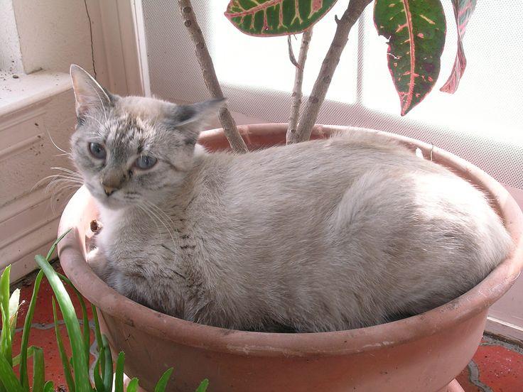 Poisonous Plants CATS = RUSSIAN = Ядовитые растения для кошек http://www.petmd.com/cat/emergency/poisoning-toxicity/e_ct_poisonous_plants