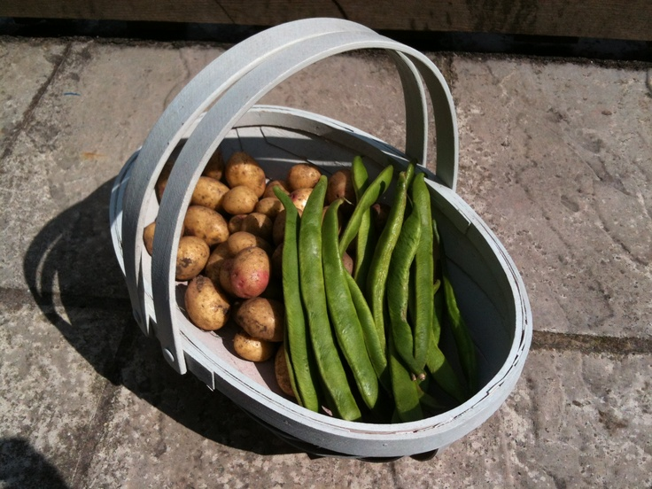 Fresh runner beans and potatoes from some of my vegetable beds in the back garden.