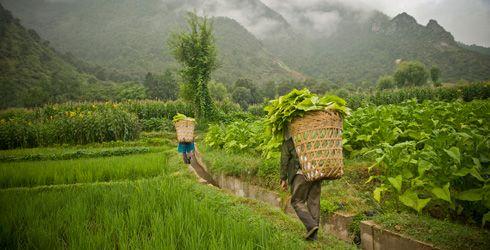 Tarımda Sürdürülebilirlik - Doğa ve Çevre - Tarım - Yaşam   Apelasyon