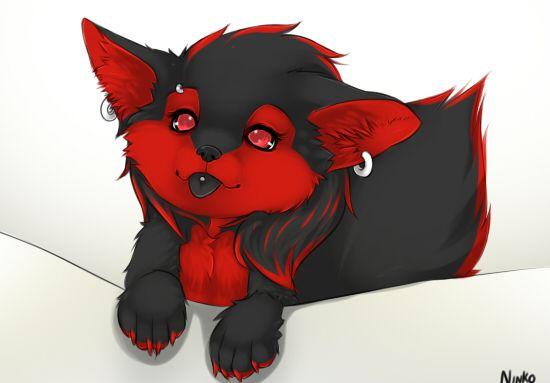 Zoe Wolf Furry - Google Search  Cute 3  Pinterest -8056