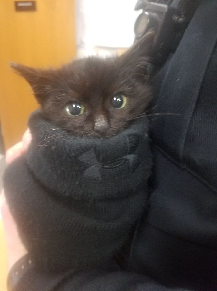 Officer Saves Kitten Stuck in Snow, the Kitty Climbs onto Him and Insists on Going Home with Him