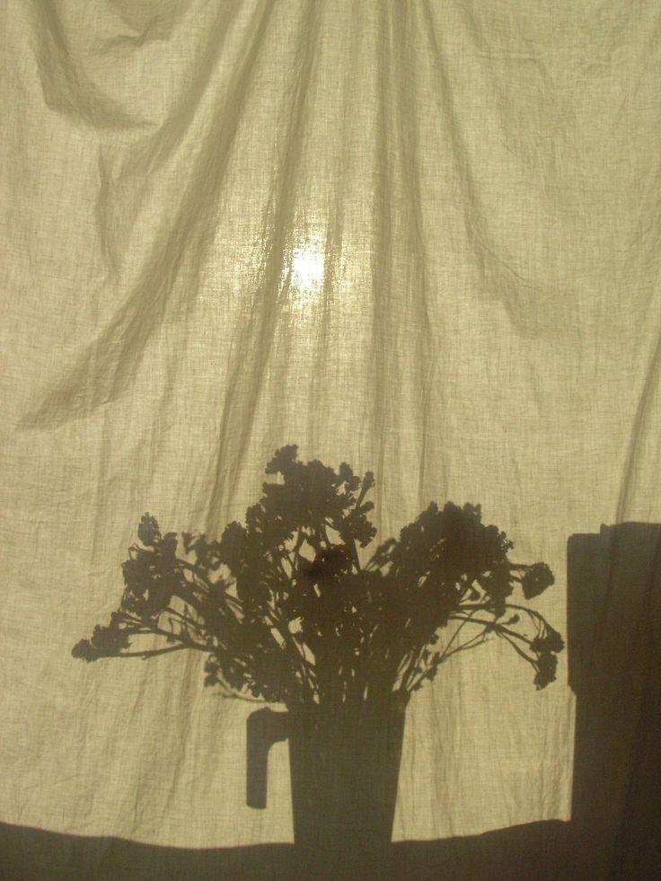 #shadow #sun #monochrome #flowers