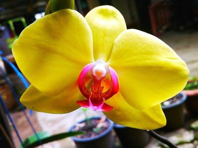 Taman Bunga Anggrek Tmii