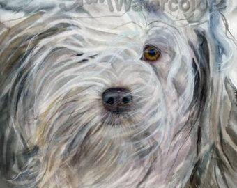 """Leeuwhondje, zilver, grijs, wit, AKC werkt, metgezel, huisdier portret hond Art aquarel schilderen afdrukken, kunst aan de muur, Decor van het huis, """"Kleine Leeuw"""""""