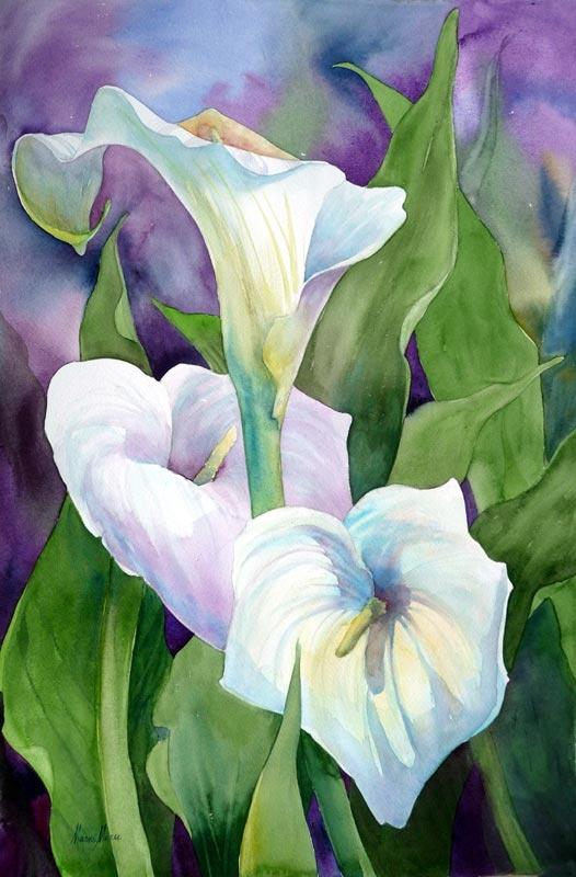 calla lilies Marni Maree