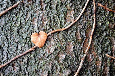 tree and heart
