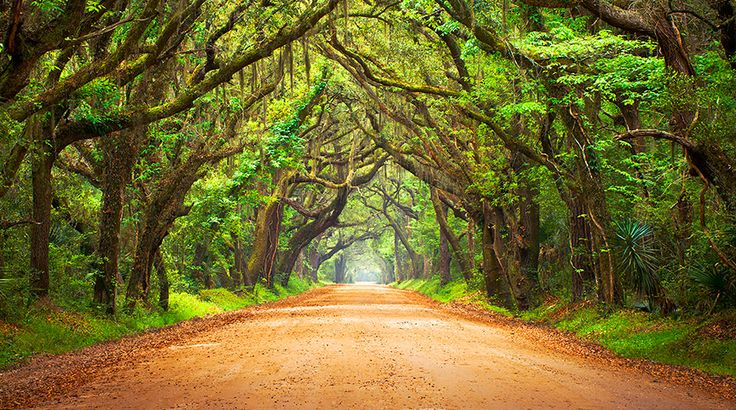 South Carolina has a lot more than just beaches. Adding everything here to my bucket list (and some I've already seen!). I love this state!!!