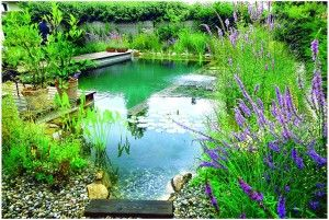 Making A Natural Swimming Pool Very Good