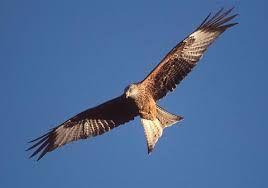 Resultado de imagen para imagenes del vuelo de aves grandes volando