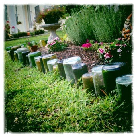 My #DIY #wine #bottle #garden #border anita_break75