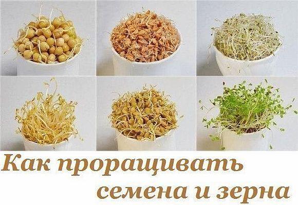 Загрузка...  Наверное, многие знают, что пророщенные семена и зерна очень полезны для здоровья. Их употребляли в пищу еще [...]